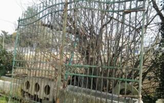 Cancello in ferro vecchio